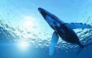 синий кит, группа синий кит